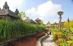 Les rizières de Ganesha avec leurs plantes éxotiques
