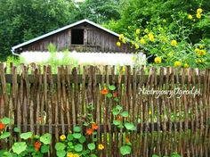 stick fence - love it and it's CHEAP  Cute cover up for the wire fence around the garden!