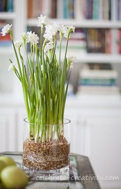 How to grow paperwhites in glass vase