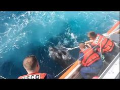 Coast Guard Heroes Rescue an Enormous Leatherback Turtle