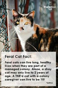 Feral Cats TNR facts ... and the one in my neighborhood has been hanging around for 14 years, so we know that she is at least that old. She was neutered and vaccinated the first year that she appeared. Our bird population, including invasive Starlings, has not reduced and we haven't seen rodents in years. #goodkitty #TrapNeuterReturnWorks
