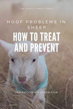 how to diagnose and prevent Sheep Farm, Sheep And Lamb, Pet Sheep, Baby Sheep, Raising Goats, Raising Chickens, Katahdin Sheep, Sheep Breeds, Future Farms
