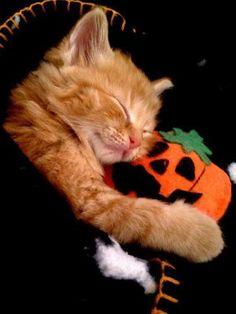 orange cat holding felt orange pumpkin