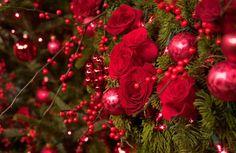 Winter roses and berries