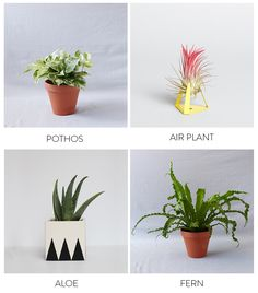Plants and Planters by The Sill