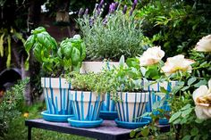 How to Paint Terracotta Pots. Terracotta pots and saucers offer the perfect blank canvas to create beautiful, unique works of art and add color and class to