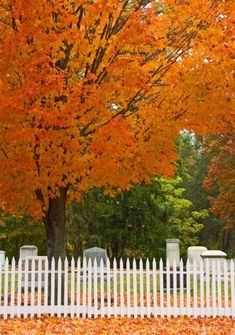 Would love to see New England in the fall! I hope we see this, this Fall :))