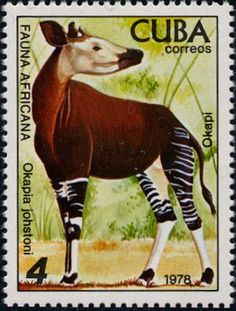 postage stamp art from Cuba - Okapi (relative of the giraffe, lives in the Democratic Rep. of Congo)