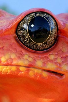 some the most amazing (and colorful) animal eyes i've ever seen