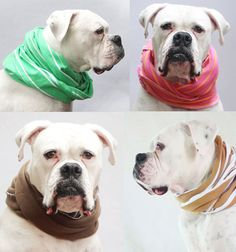 Sweet Peach makes stylish dog cowls... apparently it gets cold down south!