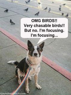 More Dog Training - CLICK PIC for Many Dog Care and Training Ideas. #doglovers #dogtrainingideas