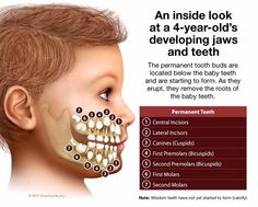 INFOGRAPHIC: A natural tooth replacement for our children | OdontoMemes