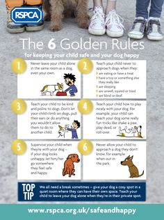 Discover our six golden rules to keeping your dogs and children safe and happy when they interact with each other in and out of the home. Dogs And Kids, Animals For Kids, Cheap Pets, Easy Pets, Dog Cleaning, Dog Safety, Safety Tips, Getting A Puppy, Small Puppies