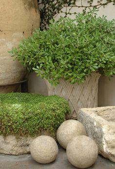 Plants in Stone Vessels