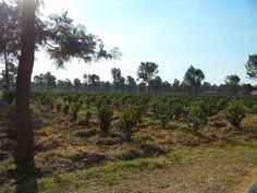 Coffee plantation in Arusha, Tanzania