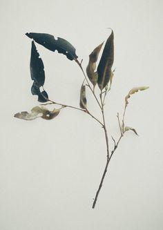 Jared Fowler's bleak photography - Bleaq Botanical Drawings, Botanical Prints, Arte Floral, Grafik Design, Art Photography, Landscape Photography, Art Drawings, Illustration Art, Trees To Plant