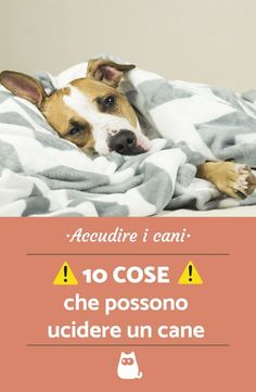 Cose che possono uccidere un cane, cose che un cane non deve assolutamente mangiare! #dog #dogs #cane #doglovers #dogcare #puppy #puppies #dogfood Sr1, All Dogs, Border Collie, Dog Friends, Poodle, Animals And Pets, Cute Dogs, Pitbulls, Dog Cat