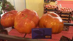 Os presentamos a nuestro tomate Rey Maño, ¿Tiene toda la pinta de ser el verdadero rey de los tomate, no? Lo podéis encontrar en el Salón de Gourmets.