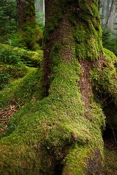 This reminds me of walking through the woods in the Pacific Northwest.  The moss covered tree roots are often tall enough to walk under.  I feel a universe of animals watching from behind trunks and branches, and I want to speak their language so I can live there too.