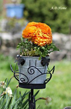 kwiaty, ogród, dom, taras