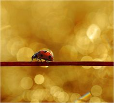 130+ Stunning Examples of Macro Photography – Photography – Tuts+