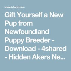 Gift Yourself a New Pup from Newfoundland Puppy Breeder - Download - 4shared - Hidden Akers  Newfoundlands