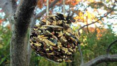 Dekorative kogler med fuglefrø. DIY easy, pretty bird feeder Pretty Birds, Bird Feeders, Easy Diy, Fruit, Food, Beautiful Birds, Essen, Meals, Yemek