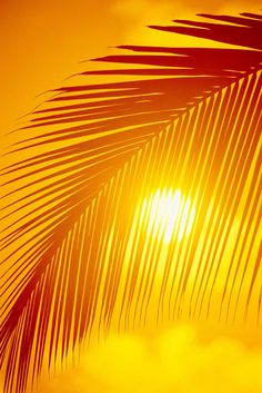 """Palm Frond Silhouette"" by Ron Dahlquist -- Click through to purchase prints or cards."