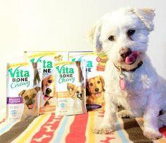 Positive Reinforcement Dog Training with Vita Bone treats