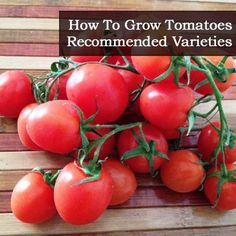 How To Grow Tomatoes � Recommended Varieties
