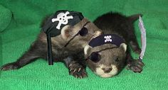 baby_ferret_pirates2 by Geist.X, via Flickr