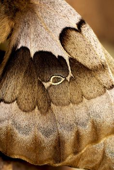 Moth Wing... as a cape, please.