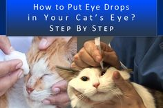 #Howto Put Eye Drops in Your Cat's Eye Step by Step, http://bit.ly/1tgcYKv