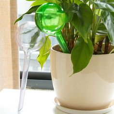 Big Sell 10 Pieces Auto Watering Dripping Mini Plastic Bottles Flower Plant Potted Plants Water Supplies for Travel Outdoor
