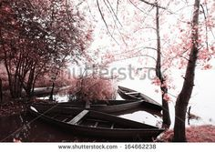 The Magical infrared efex - stock photo