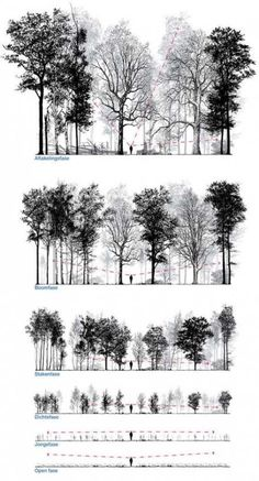 Patrick Ruijzenaars / In imagining and designing forest is frequently talked about the final stage. Equally interesting is the way to get there. It takes many human lives, indeed a lifetime, for them to mature and a young forest is often the least. Croquis Architecture, Architecture Graphics, Landscape Architecture, Landscape Design, Architecture Plan, Fall Landscape, Architecture Portfolio, Affinity Photo, Tree Sketches