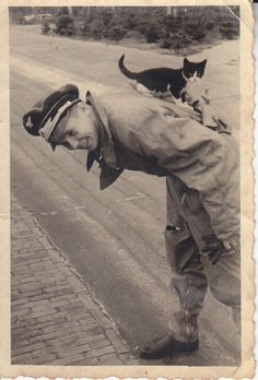 Luftwaffe member playing with cat