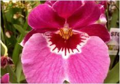 Cuidar las Orquídeas en casa