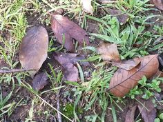 Love the contrast in colours between the leaves and the grass as positive spaces, and the earth and moss as negative spaces. Beautiful delicate veins in the leaves, with a sort of violet hue blended with brown ochre.