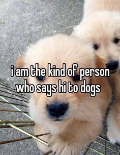 And ignores the human