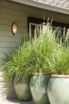Plant lemon grass in big pots for the patio. It repels mosquitoes and it grows tall. Plant lemon grass in big pots for the patio. It repels mosquitoes and it grows tall. Container Gardening, Gardening Tips, Organic Gardening, Gardening Gloves, Container Plants, Vegetable Gardening, Container Flowers, Gardening Websites, Succulent Containers