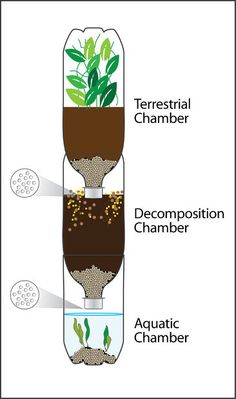 Eco-Column: By: Kelsie Fronheiser, Gene Edwards, Jenny Kraus, Justin LangeIntroduction:These instructions will help you create your very own eco-column in your home or classroom. An eco-column is a self-sustaining ecosystem on a small scale Science Fair Projects, Science Lessons, Life Science, Teen Projects, Science Classroom, Teaching Science, Science For Kids, 5th Grade Science, Middle School Science