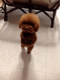 17 GIFs of Dogs Walking Around Like They're People