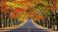 Eyes Go Travel : Worldwide Tourist Attractions - Photo of Memorial Avenue in Autumn, Mount Macedon, Victoria, Australia Tourist Attraction 4 Fall Wallpaper, Nature Wallpaper, Wallpaper Desktop, Desktop Backgrounds, Hd Desktop, Nice Wallpapers, 1920x1200 Wallpaper, Computer Wallpaper, Autumn Nature