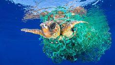 La contaminación en los océanos, afecta ya a nivel celular a las especies marinas.