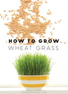 how to easily grow wheatgrass