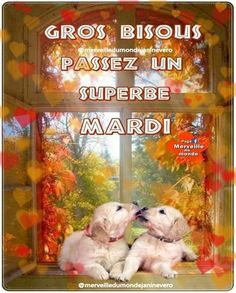 Bon Mardi, Teddy Bear, Messages, Animals, Hapy Day, Handsome Quotes, Bonjour, Notebooks, Animales