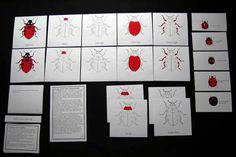 Montessori ladybugs Parts of a Ladybug