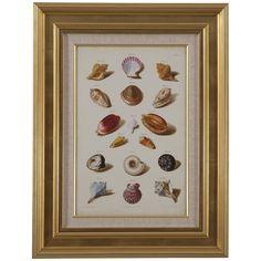 Bassett Mirror Pan Pacific Muller Shells VI Art
