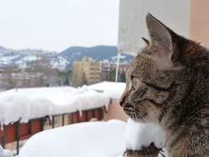 Malù e la sua prima neve! Febbraio 2012